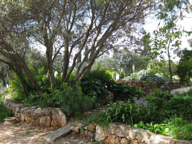 Associazione giardino mediterraneo a proposito della mgs - Progetto giardino mediterraneo ...