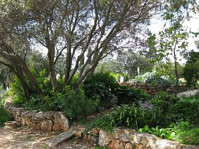 Associazione giardino mediterraneo a proposito della mgs for Progetto giardino mediterraneo