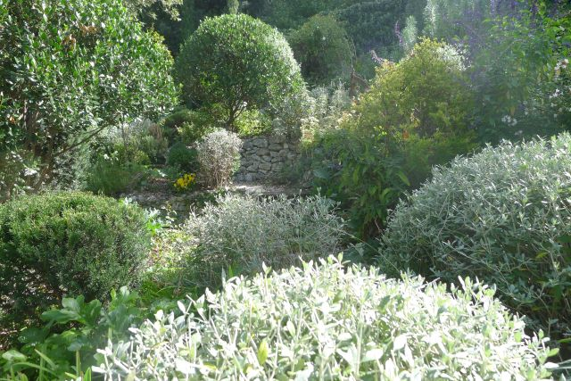 Piante Mediterranee Selvatiche : Associazione giardino mediterraneo a proposito della mgs