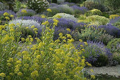 Associazione giardino mediterraneo un giardino senz acqua - Piante mediterranee da giardino ...