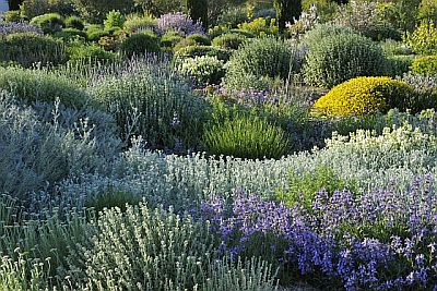 Associazione giardino mediterraneo conservare e risparmiare saggiamente l acqua nel giardino - Piante mediterranee da giardino ...